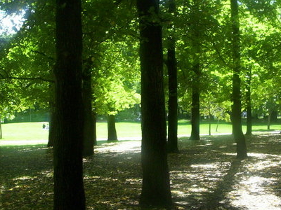 Glebe  Park In  Autumn