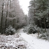 Glenmore Forest
