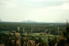 Gotjawal Forest