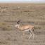 Nechisar Parque Nacional