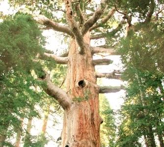 The Great Bonsai Tree