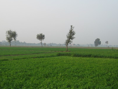 An Agricultural Area