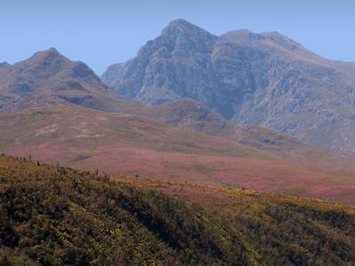 Grootvadersbosch  Nature  Reserve In Langeberg Range