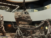 Kunming Natural History Museum of Zoology