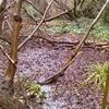 Gunnersbury Triangle Mangrove Swamp