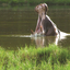 Haller Wildlife Park - Ecossistemas Lafarge