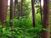 Hanamahihi Hut To Ngahiramai Hut Trail - Te Urewera National Park - New Zealand
