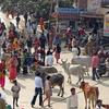 Haridwar Square