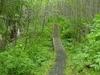 Harris River Trail