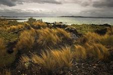 Hauraki Gulf From Rangitoto Island - Auckland NZ