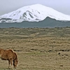 Hekla And An Icelandic Horse