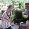 Hello Bonsai Garden