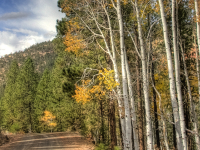 Fall Colors Along Hell's Backbone Road