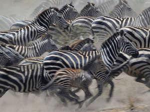 6 Day Tanzania Camping Safari Photos