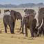 Herds Of Elephnats In Amboseli