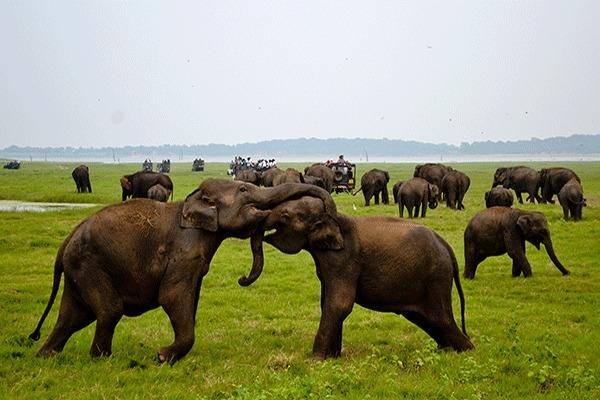 Heritage And Elephants In Sri Lanka 5 Days Tour Photos