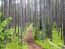 Hermitage Point Trail - Grand Tetons - Wyoming - USA