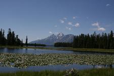 Heron Pond Swan Lake - Grand Tetons - Wyoming - USA