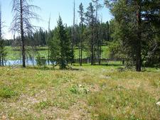 Heron Pond Swan Lake Trail - Grand Tetons - Wyoming - USA