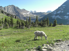 Hidden Lake Trail Views - Glacier - Montana - USA