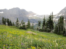 Hidden Meadow Trail - Glacier - Montana - USA