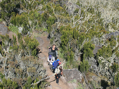 Hikers Along Shira Route - Kilimanjaro