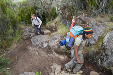 Hikers Descending Kilimanjaro - Mweka Route
