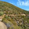 Hiking Trail In Palomar Mountain Range