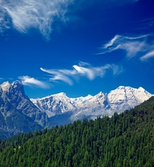 Himalayas & Indian Forests