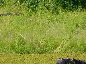 Hippo Trail - 10 Days Safari Fotos