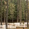 Historic Ainsworth Cemetery