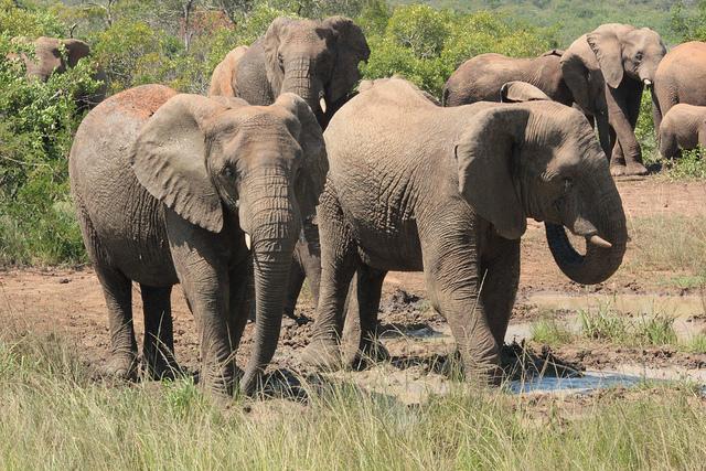 South African Explorer - 12 Days Photos