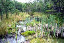 Hochmoor Nature Park, Schrems