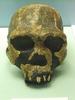 Homo Ergaster Skull Replica,Koobi Fora