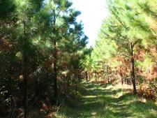 Hoolie Bacon Trail 111 - Tonto National Forest - Arizona - USA