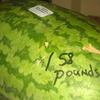 Hope Watermelon