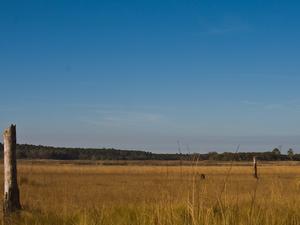 Hopkins Prairie Campground