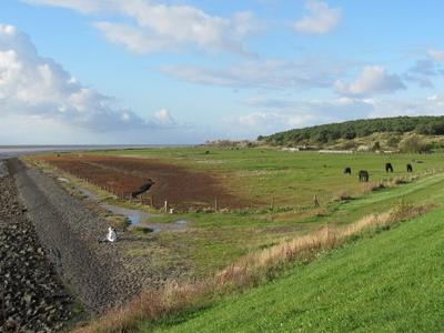 Horse Paddocks In  Oost   Vlieland