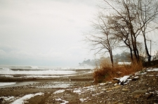 Hosta - Sochi Winter Sea