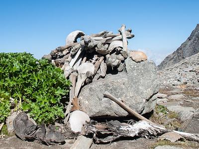 Human Skeletons In Roopkund Lake