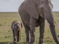 Humbling Sweetwaters ~ Kenya