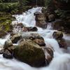Humpback Creek Trail