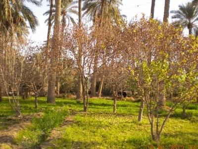 Husseinyah Fruit Gardens