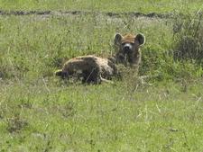 Hyena Kenya