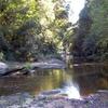 Hacking River Near Lady Carrington Drive