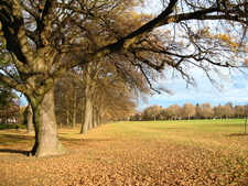 North Hagley Park In Autumn