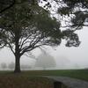 Foggy Morning North Hagley Park
