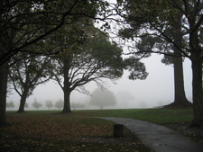 Foggy Morning North Hagley Park