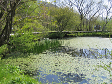 Hakone Botanical Garden