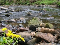 Haltwhistle Burn